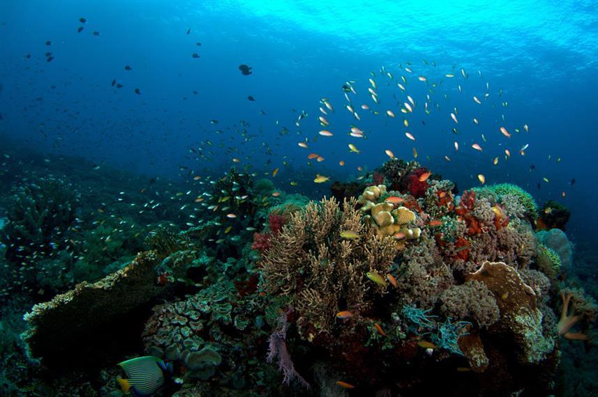 coral_reef_hw857h570crwidth857crheight57