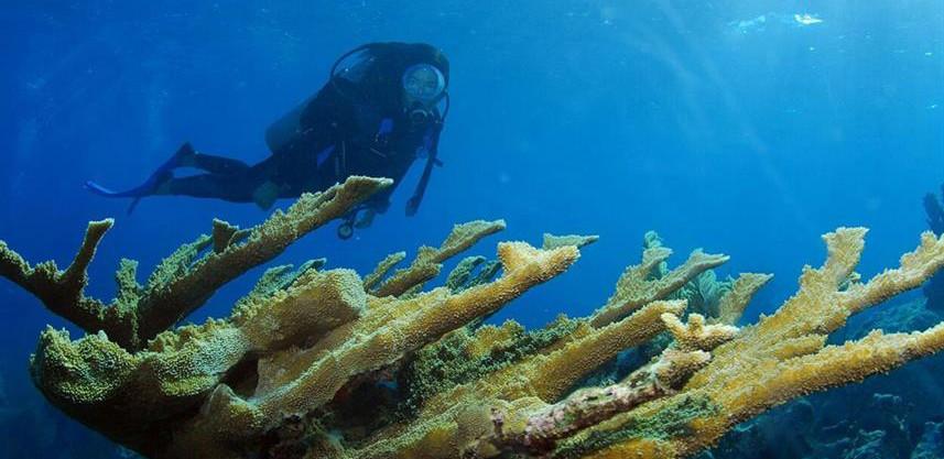 diver-by-elkhorn-coral-ldw857h570crwidth