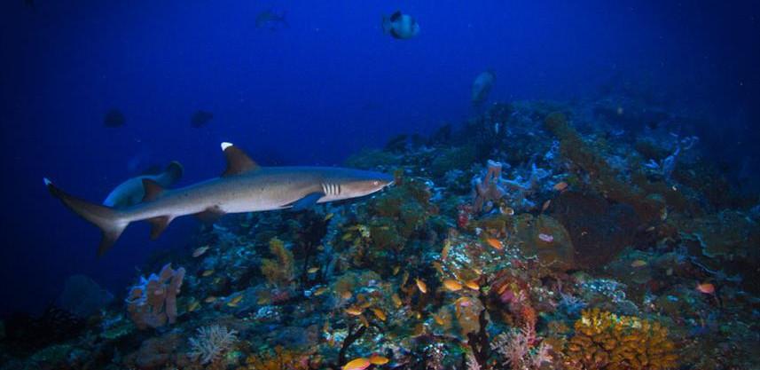 shark-1w857h570crwidth857crheight570.jpg
