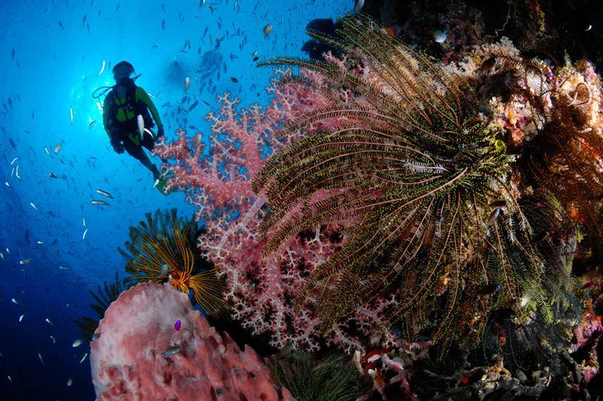febrina-liveaboard-divingw857h570crwidth