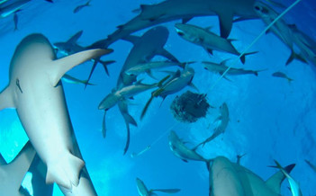 shark-feed-dave-valencia-vhdw857h570crwi