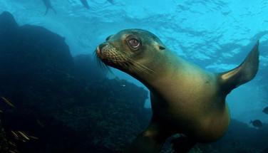 Galapagos_Sea_Lionw857h570crwidth857crhe