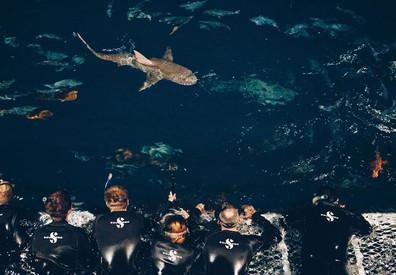 deepsea-oceanquest34w857h570crwidth857cr
