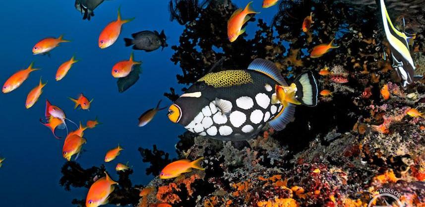 maldives_uw8w857h570crwidth857crheight57