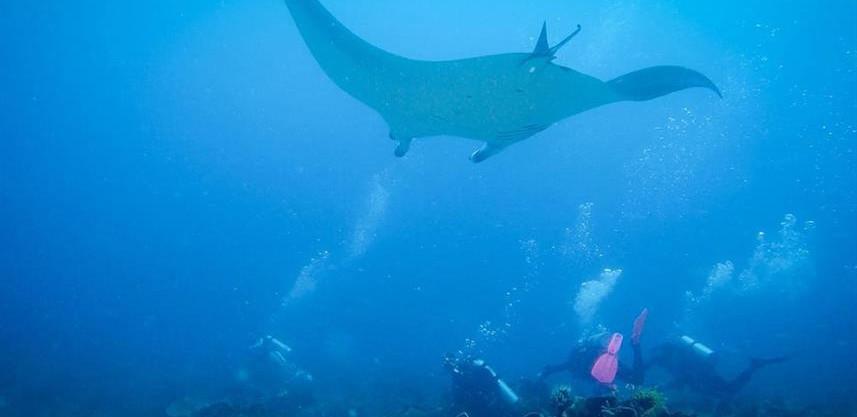 underwater-4w857h570crwidth857crheight57