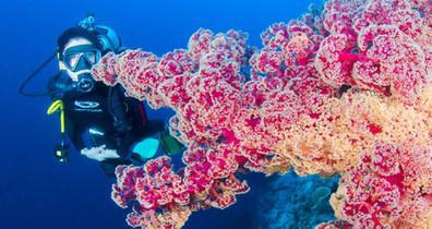 Soft-Corals-Osprey-Reefw857h570crwidth85