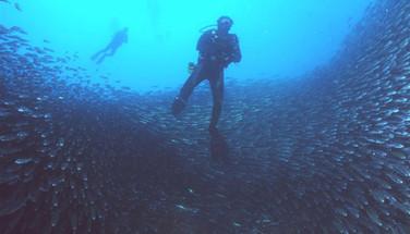 galapagos-schools-of-fishw857h570crwidth