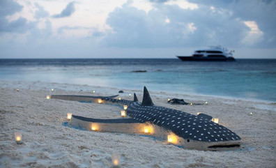 conte-max-liveaboard-maldives-landexcurs