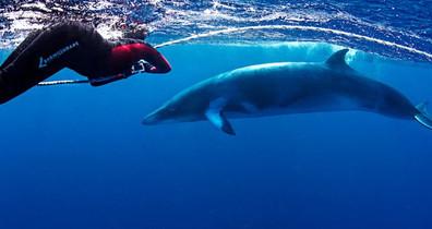 Minke-Whale-Lighthouse-Bommiew857h570crw