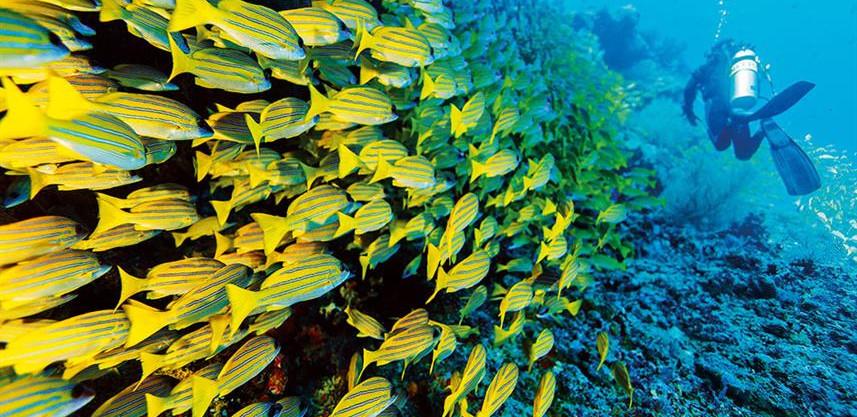 diving_underwaterw857h570crwidth857crhei