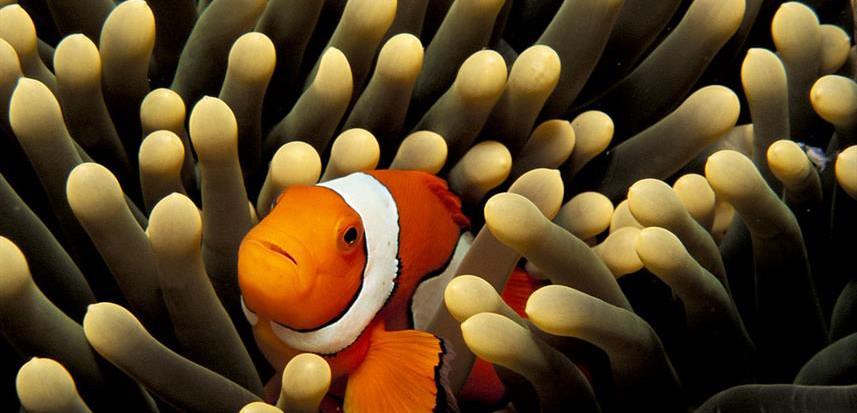 febrina-liveaboard-clownfishw857h570crwi