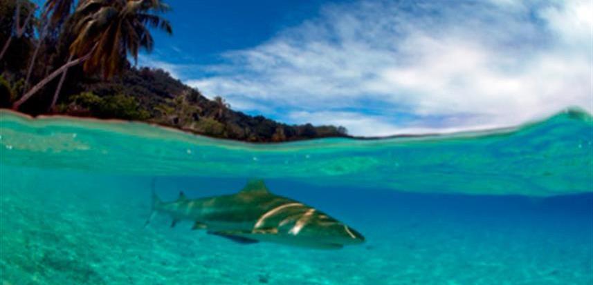 BlackTip_Shark_French_Polynesia01w857h57