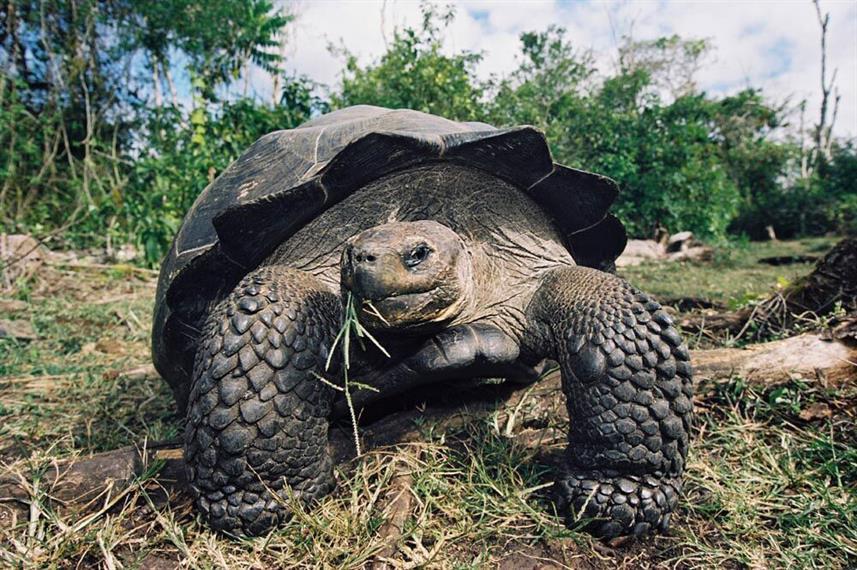 galapagos-tortoise02_previeww857h570crwi