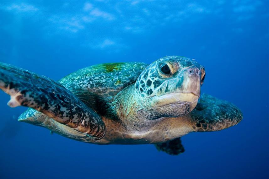 sea-turtle_previeww857h570crwidth857crhe