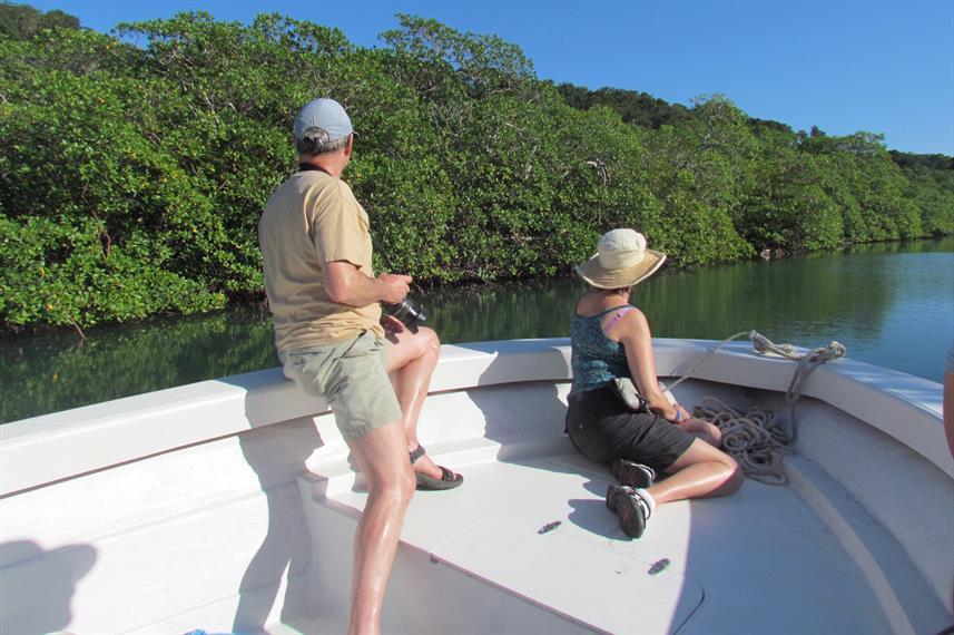 port-royal-mangrovesw857h570crwidth857cr