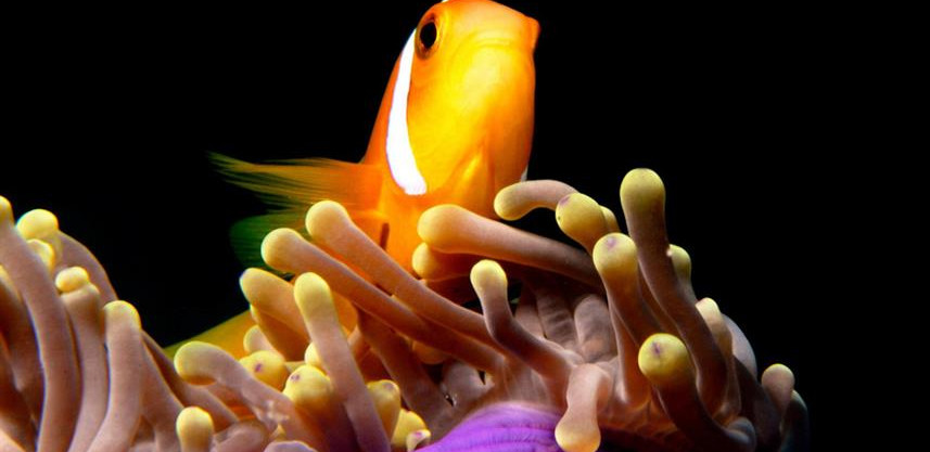 Clownfishw857h570crwidth857crheight570.j