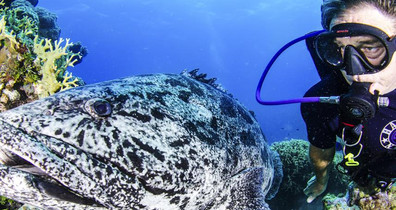 Cod-Diver-Mike-Ball-Dive-Expeditionsw857