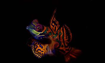 febrina-liveaboard-marinelifew857h570crw