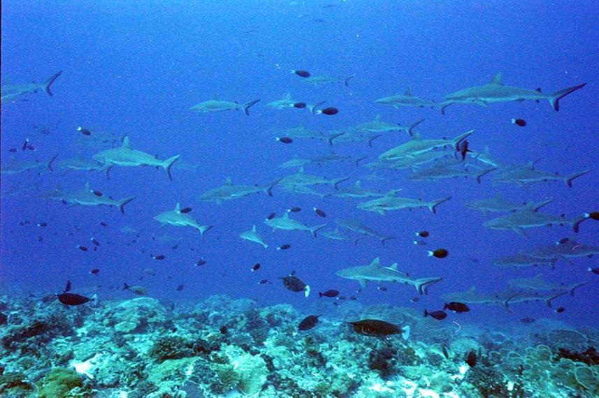 requins-banc2w857h570crwidth857crheight5