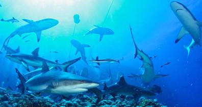 sof-sharks3w857h570crwidth857crheight570