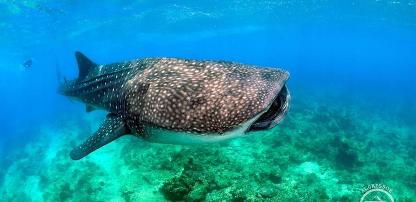 maldives_uw33w857h570crwidth857crheight5