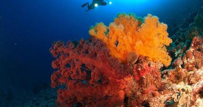 sof-soft-coral1w857h570crwidth857crheigh