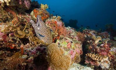 Maldives_UW15w857h570crwidth857crheight5