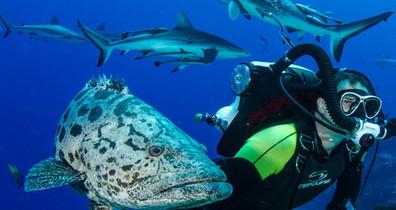Diver-Cod-Sharkw857h570crwidth857crheigh