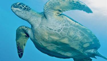 turtle-underside-humboldt-explorer-galap