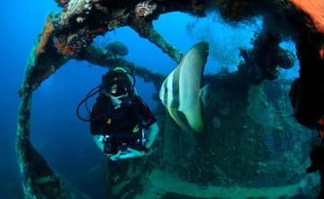batfish_und_diver_hw857h570crwidth857crh