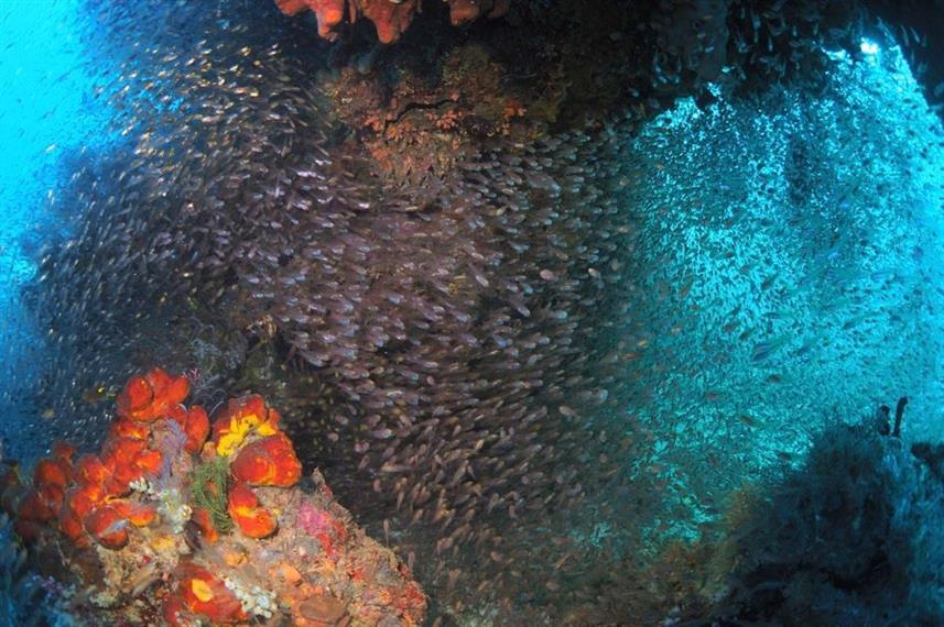 glassfishw857h570crwidth857crheight570.j