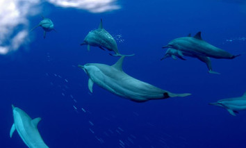 febrina-liveaboard-dolphins2w857h570crwi
