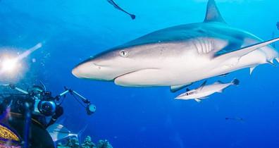 Coral-Sea-Safariw857h570crwidth857crheig