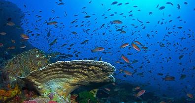 palau-reef-scenew857h570crwidth857crheig