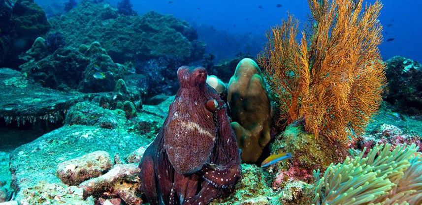 coralsw857h570crwidth857crheight570.jpg