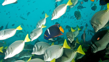 school-of-fish-humboldt-explorer-galapag