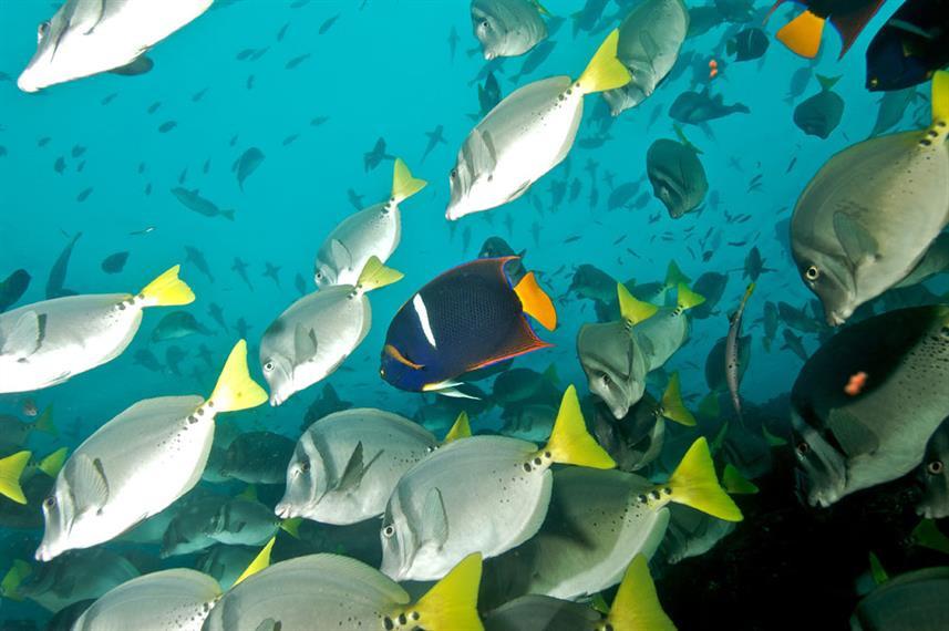 school-of-fish-humboldt-explorer-galapag
