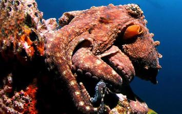 octopus-avi-klapferw857h570crwidth857crh