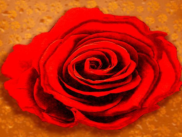 rose in raindrop backdrop_no logo_edited