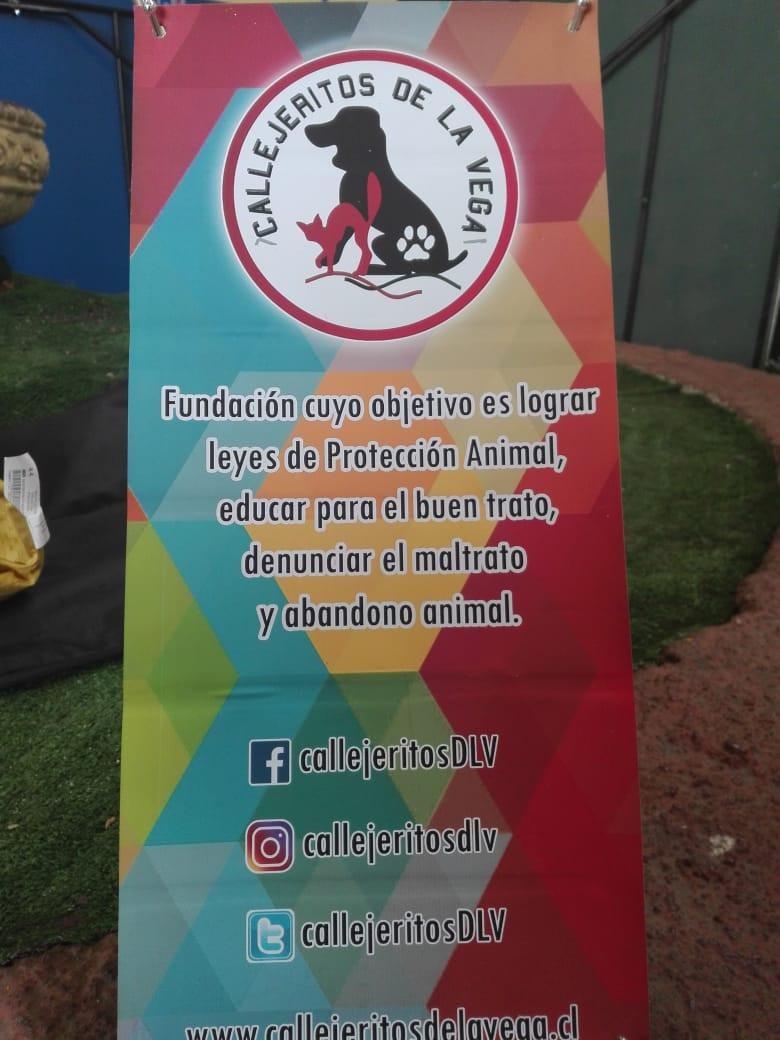 Fundación_Callejeritos_de_la_Vega12