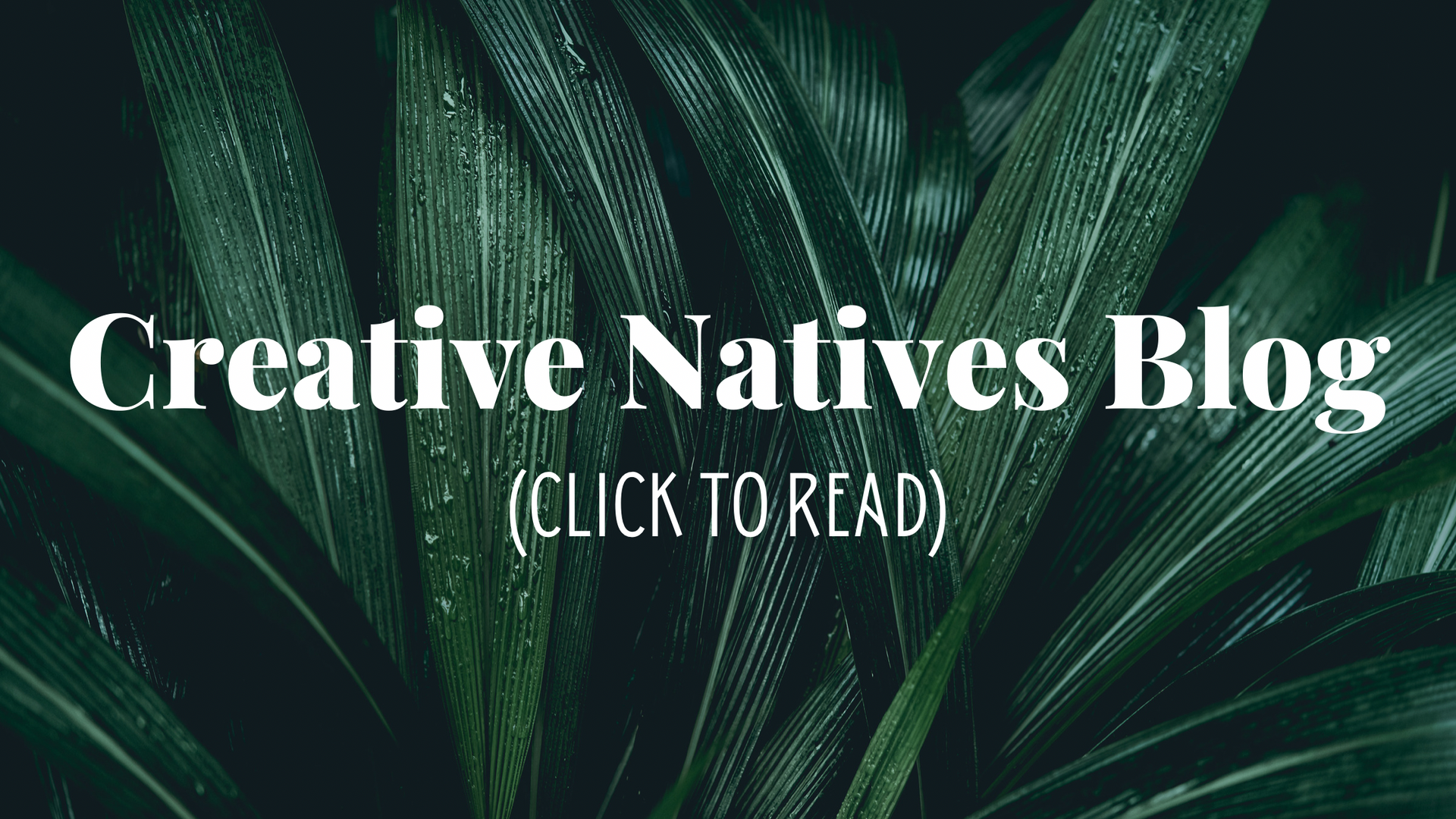 Creative Natives Blog`