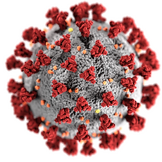 Covid 19 virus.png
