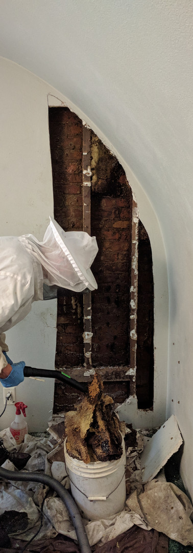Bedroom Bee Removal