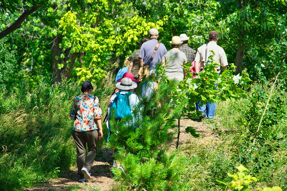 Forest walking trails in Downsview Par