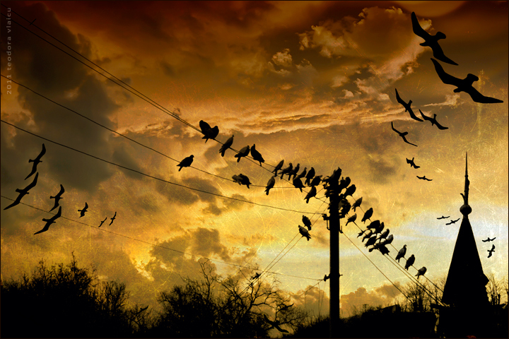 birdsandwich-edit.jpg
