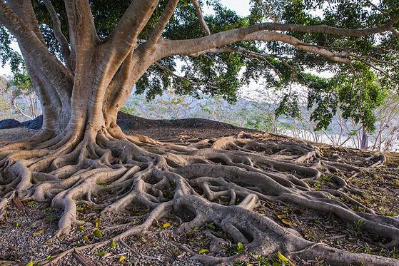 Baum mit Wurzeln in der Natur