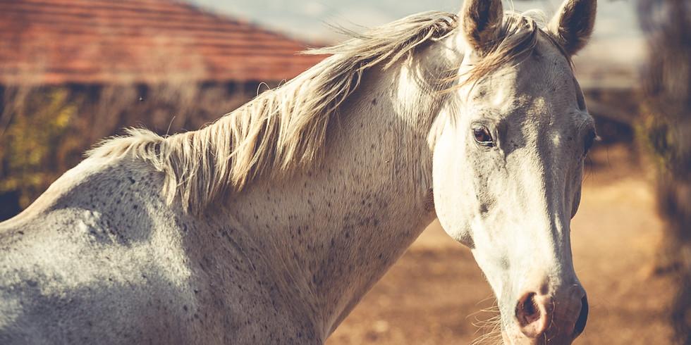 """Очи в очи с коня"". Курс онлайн"