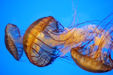 Jellyfish 1_COLOR EDIT.jpg