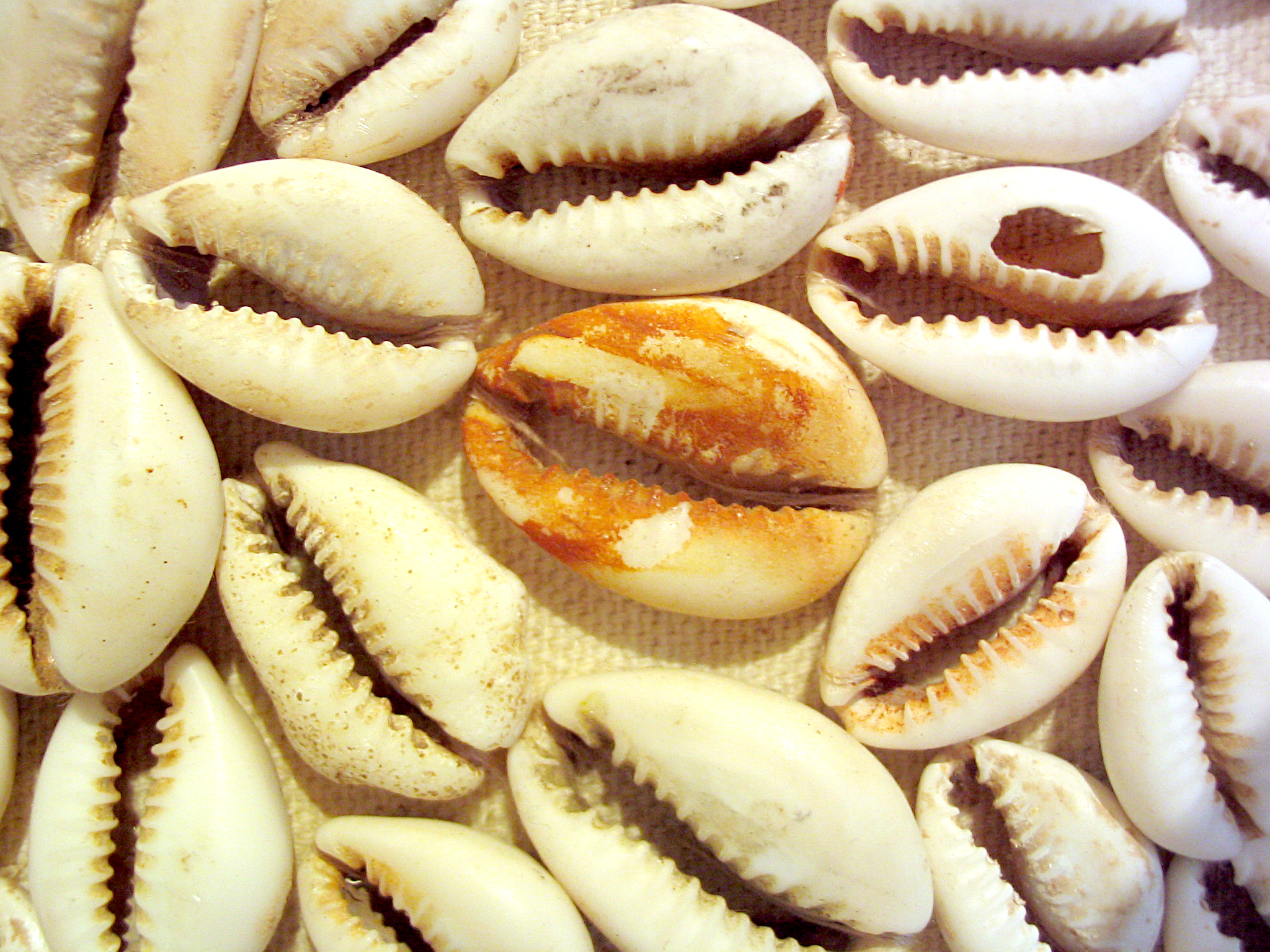 Cowrie_Flower (detail 1).jpg