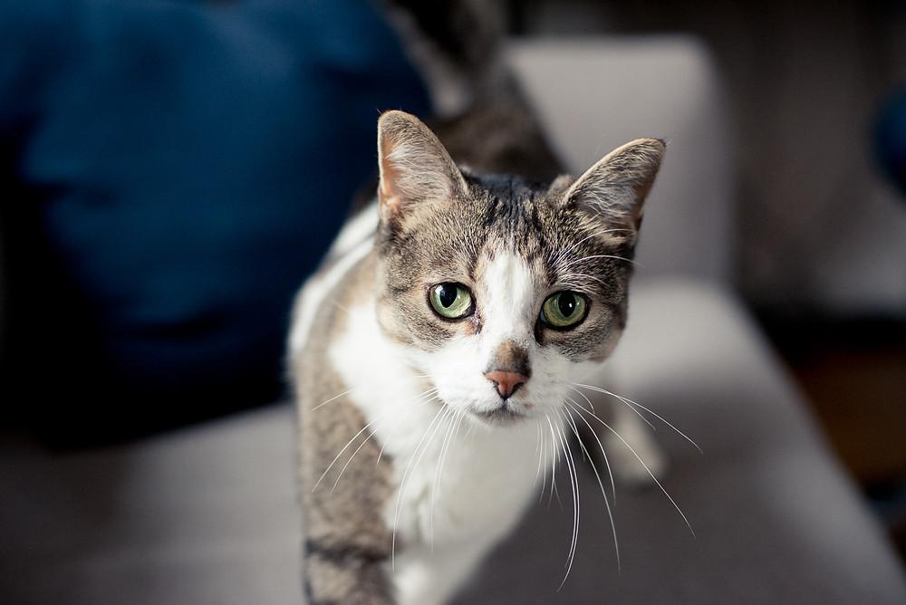 Pet Cat Photography Rochester, NY